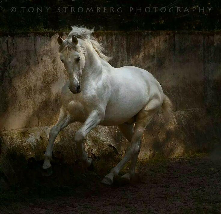Tony Strombetg Photographer Genius