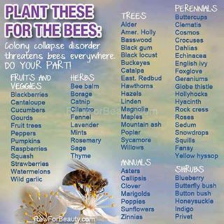 Plant these for the bees! All bees not just honey bees!  Our little allies in the garden are struggling to survive.  Help them out!