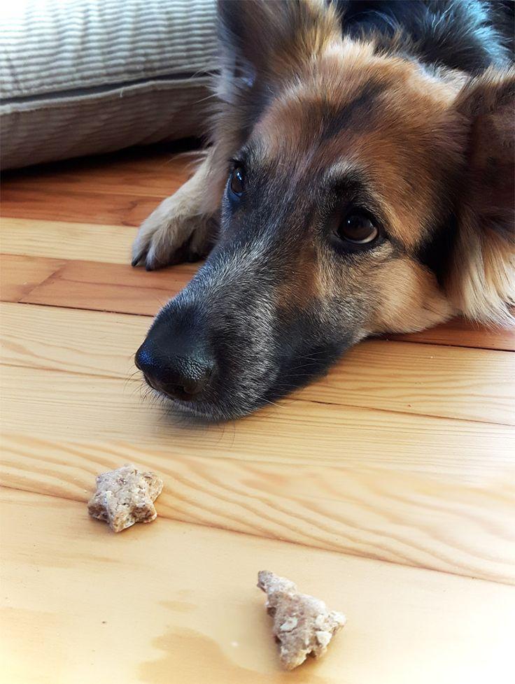 Hundekekse selber machen
