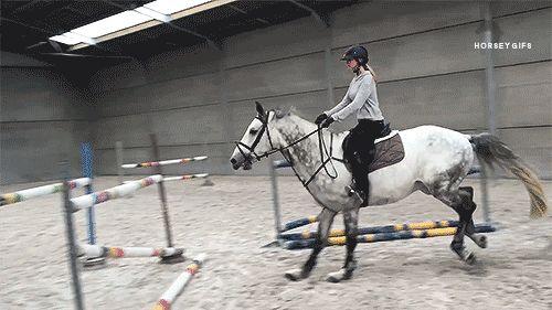 horse gifs tumblr - Google Search