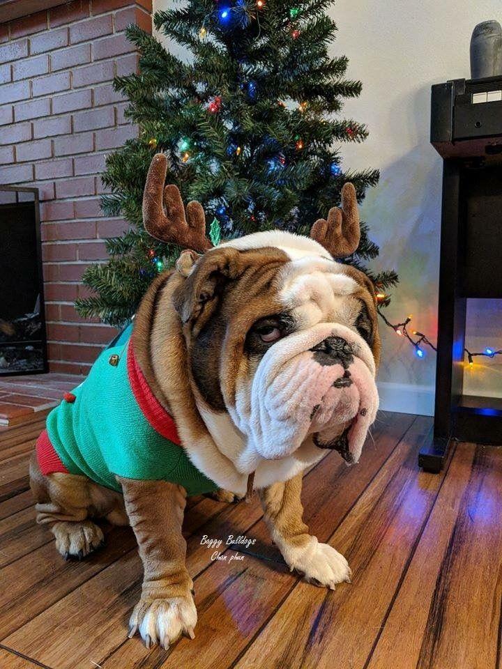 Weeee, it's Christmas!!