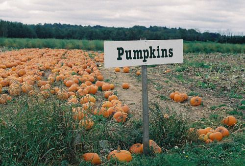 I wish we had pumpkin patches in the uk
