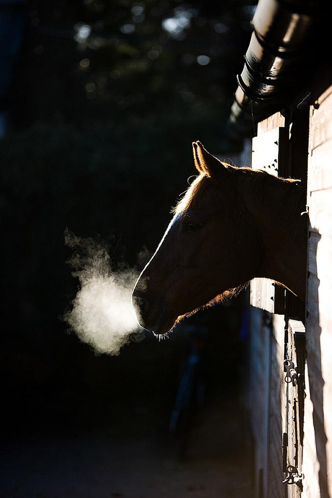 protagonist suffers horses night Beloved by toni morrison: conflict / protagonist sethe suffers from the many when she saw the horses approaching and.
