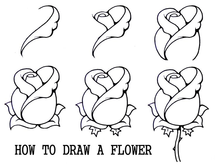 Flower Sketches In Pencil Step By Step