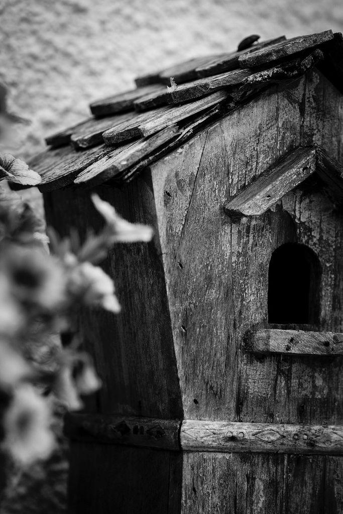 Home for birds