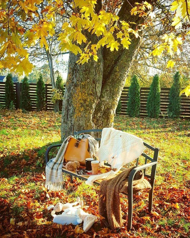 солнечного настроения, друзья @tatiana_khasina #galleria_arben #сад #цветаосени #утреннеесолнце #листопад #осень #выходные #вдохновение