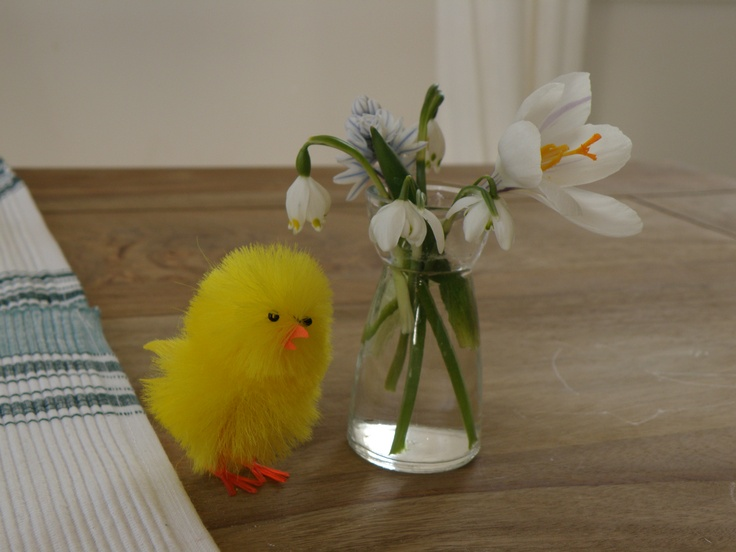 "Invite a little spring to your table.  One fluffy yellow chick ""nothing"" next to tiny vase filled with the first spring bulbs from the garden. And take your breakfast and smile to chicken telling it - hey, you are cute next to those snowdrops! And your day will be like just a new born. It is really low cost fun! ha ha"