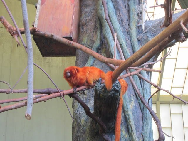 Jana's Place: Fresno Chaffee Zoo ~ Tropical Rainforest Exhibit