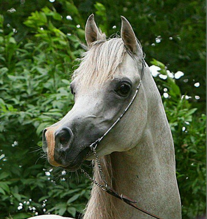 232 best customizing/resculpting model horses images on ...