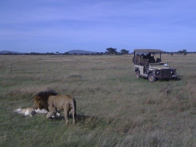 We came across these amorous lions in Singita's Grumeti Reserve on the edge of Serengeti National Park, Tanzania.