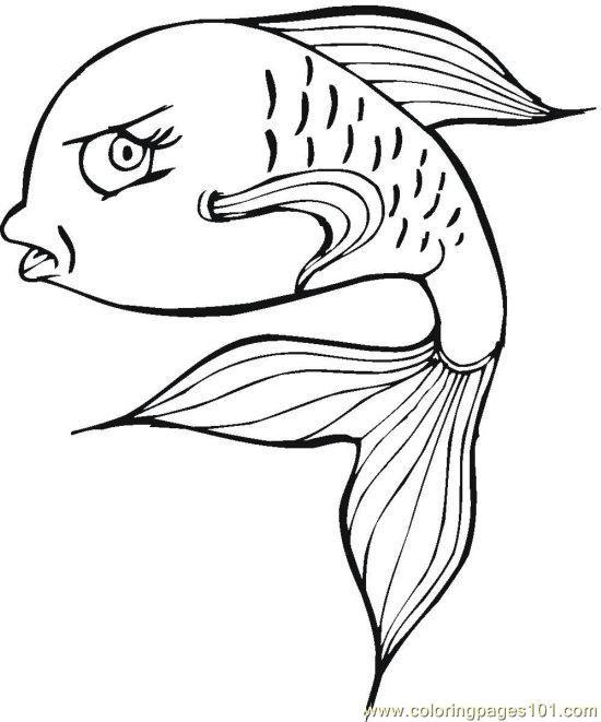 198 best images about Animais aqu ticos Aquatic animals
