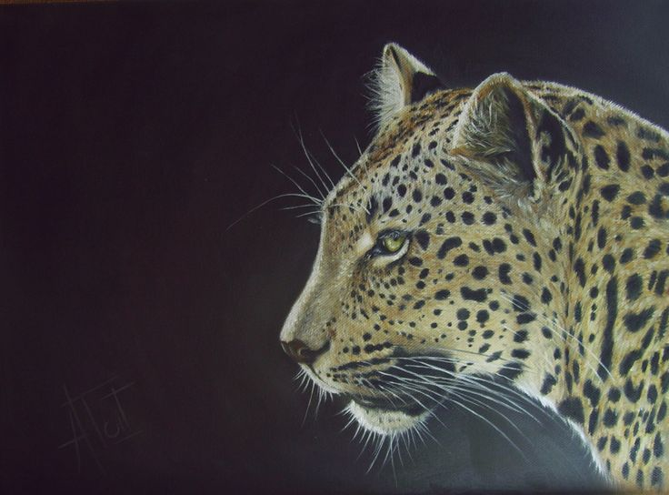 Leopard Oil on canvas 40cm x 30cm SOLD