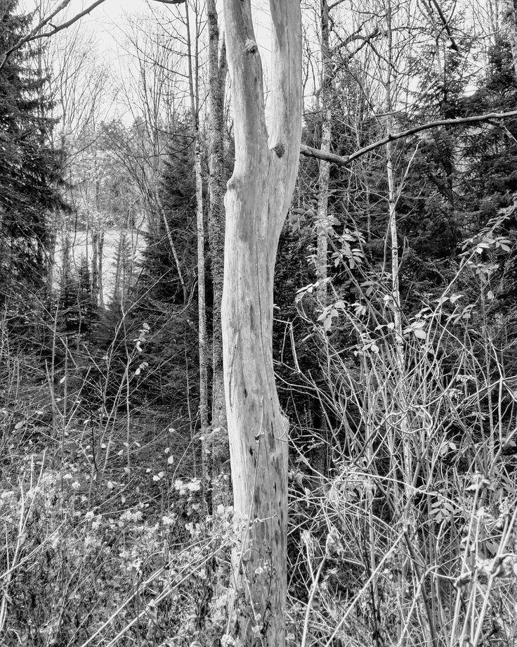In Schwarzweiss sieht dieser tote aber noch aufrecht stehende Baum noch viel spezieller aus.  #Naturmomente #Schwarzbubenland #Solothurn #Nunningen #Schweiz  #photooftheday #magicplaces #kraftorte #switzerland #switzerlandpictures #magicswitzerland  #nature #naturelovers #green #forest #fall #autumn #sky #mountains