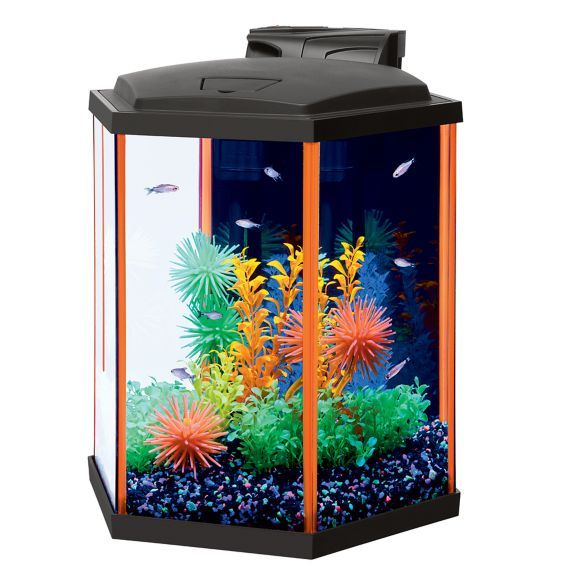 139 best betta fish tanks images on pinterest aquariums for What type of water do betta fish need