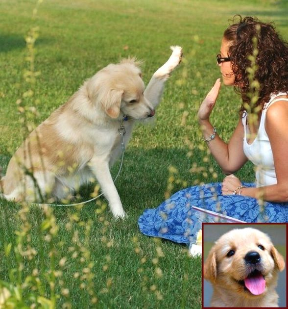 Dog Behavior Classes Near Me And Clicker Training Dogs For