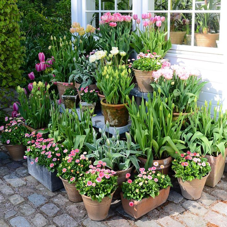 """""""Pink pots ... #flowers #garden #spring #clausdalby"""""""