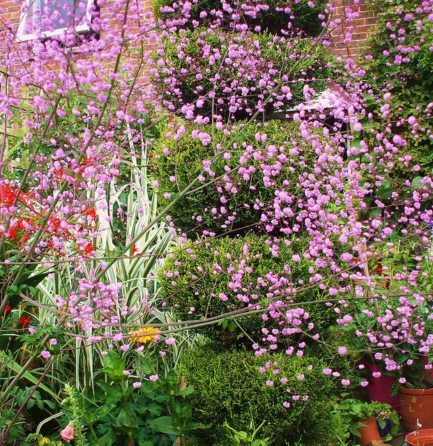 My Cottage Garden Plants Gardens And Flowers