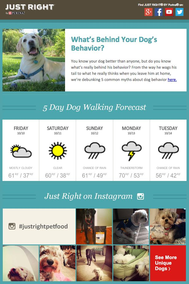 Purina included a local five-day weather forcast in this email to alert dog owners of the best days to walk their dogs. This email also included the latest Instagram photos with #justrightpetfood, and the feed was displayed at the bottom of the email. #emailmarketing #realtime #geotargeting #countdowntimer