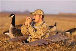 70 Best Goose Obsession Images On Pinterest Waterfowl
