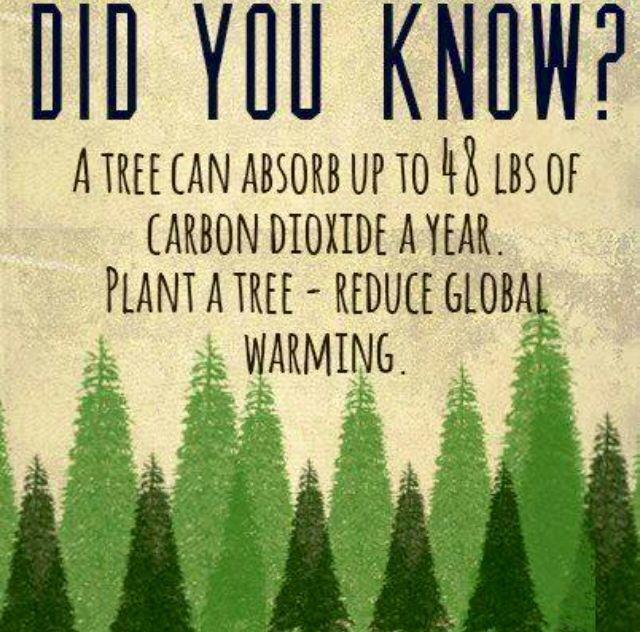 Plant a tree #greenup