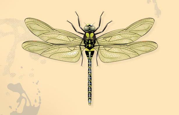 17 Best Images About Dragonfly Paintings On Pinterest Wiring Diagram