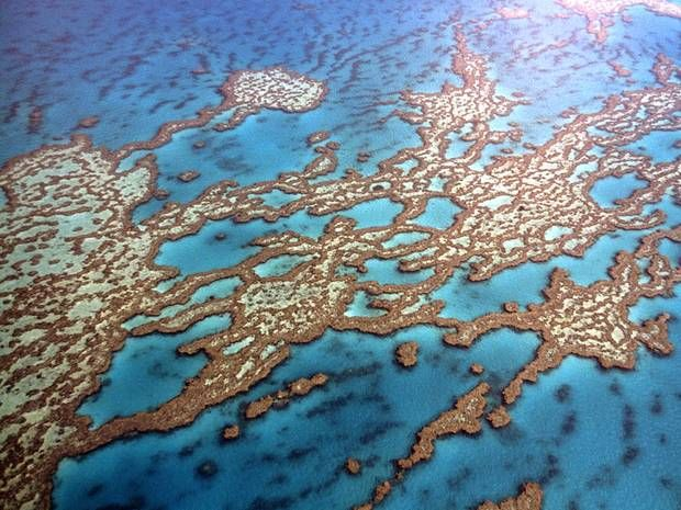 great barrier reef etc guide