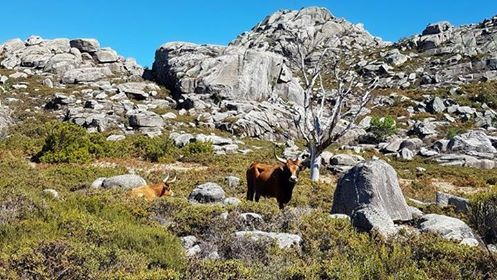 A bit suspicious about what we were doing on his mountain | Keen Tours | Guides Trails