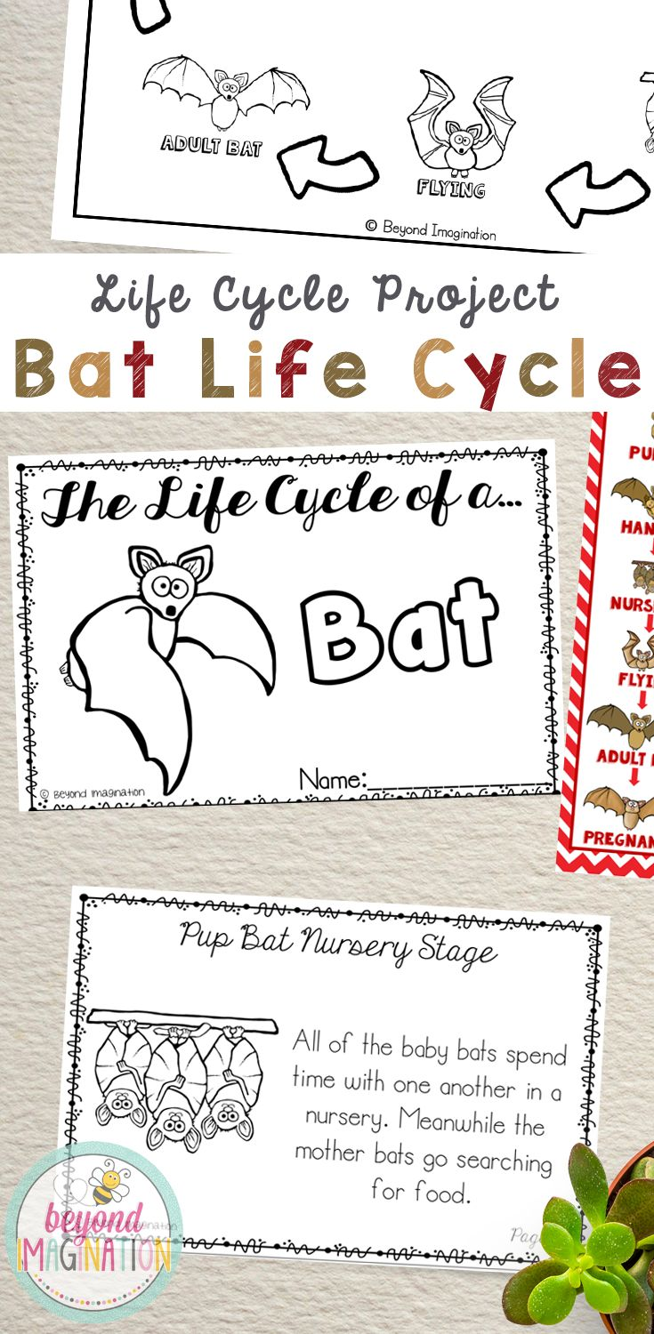 A really cute bat life cycle project. The pictures used in this are too cute! Includes super fun bookmarks that visually show the bat life cycle process.