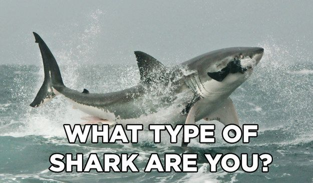 What Type Of Shark Are You? | You got: Mako Shark Sure, you may not be the biggest shark in the sea, but what you lack in size you make up for in agility. You're the speediest shark in the sea, and other fish know better than to try and swim away from you. If life was a contest, you'd be winning it.