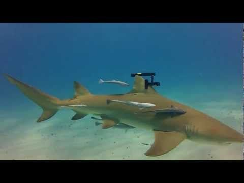 Holy crap real-life sharks wielding real-life lasers!