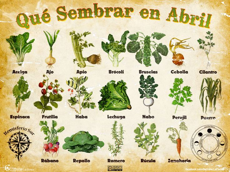 Germina La Florida: Calendario de Siembra de Abril