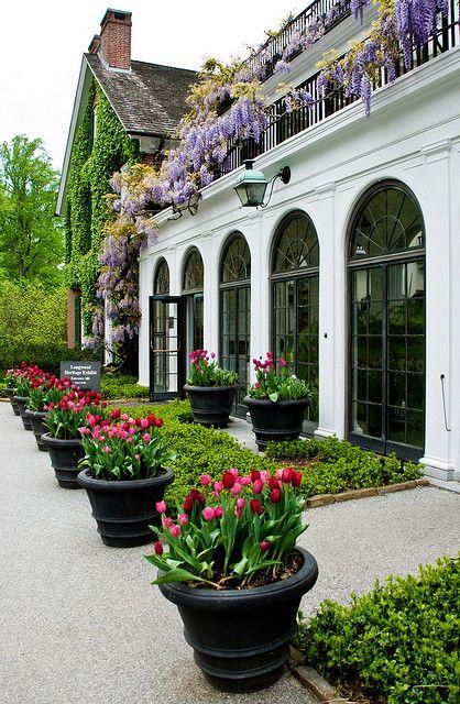 Longwood Gardens - tulip pots, wisteria