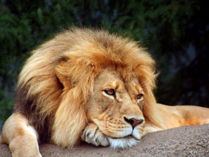 Lion Sanctuaries in Andhra Pradesh, India @ Sanctuariesindia.com