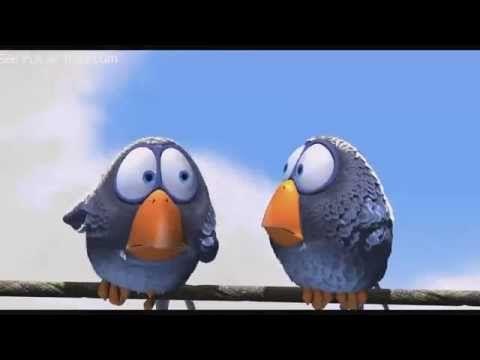 Vögel auf Stromleitung YouTube