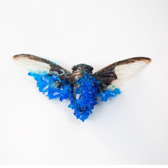Dode insecten vergroeien met edelstenen in Tyler Trashners alchemistische kunst | The Creators Project