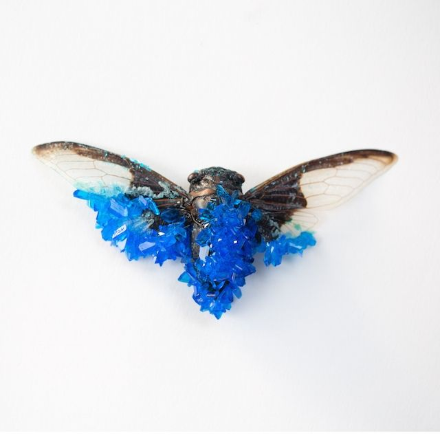 Bugs Get Bejeweled into Crystal Critters | VICE Canada | The Creators Project