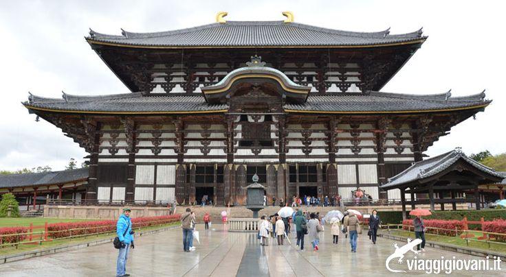 """Il Parco di Nara è conosciuto meglio con il nome di """"Parco dei cervi"""", poiché cervi maschi e femmine convivono e si divertono insieme in tutta libertà. A ovest incontriamo il Tempio di Kofukuji, edificato nel 710. Un gran numero di statue buddiste di grande valore sono esposte nella """"Casa del Tesoro Nazionale"""", e il muro di cinta del tempio racchiude in sé una pagoda a cinque piani che si riflette nelle acque del lago Sarusawa. Seguite #GiapponeExpress.  [Contributo di Cristiano Guidetti]"""