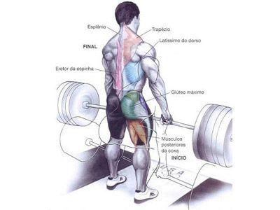 O Levantamento Terra é sem dúvida um dos principais exercícios que trabalham diversos músculos de forma intensa, causando a hipertrofia muscular!