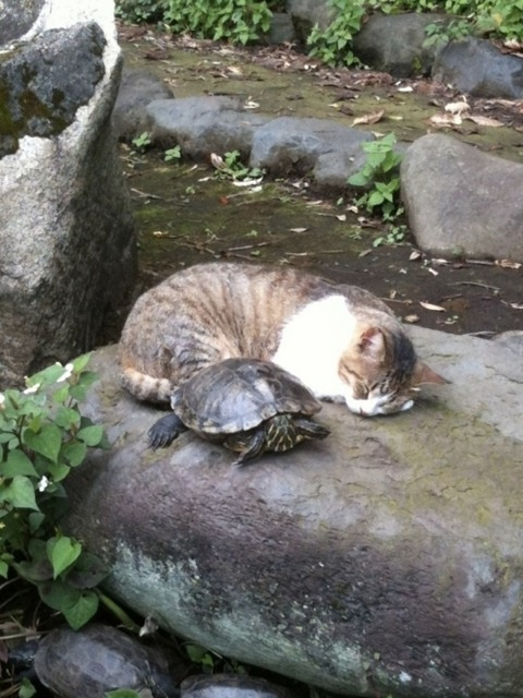 turtle and friend.
