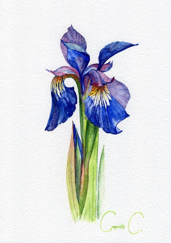 Flower Iris Blue Iris Watercolour Iris Green Original Painting From The Artist Art And Collectibles Drawin Iris Drawing Iris Painting Blue Iris Flowers