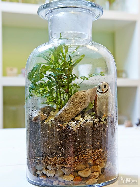 An owl finds a home in this terrarium filled with pebbles, dried sphagnum moss, potting soil, terraroim plants, lichen, stones, driftwood, and shells.