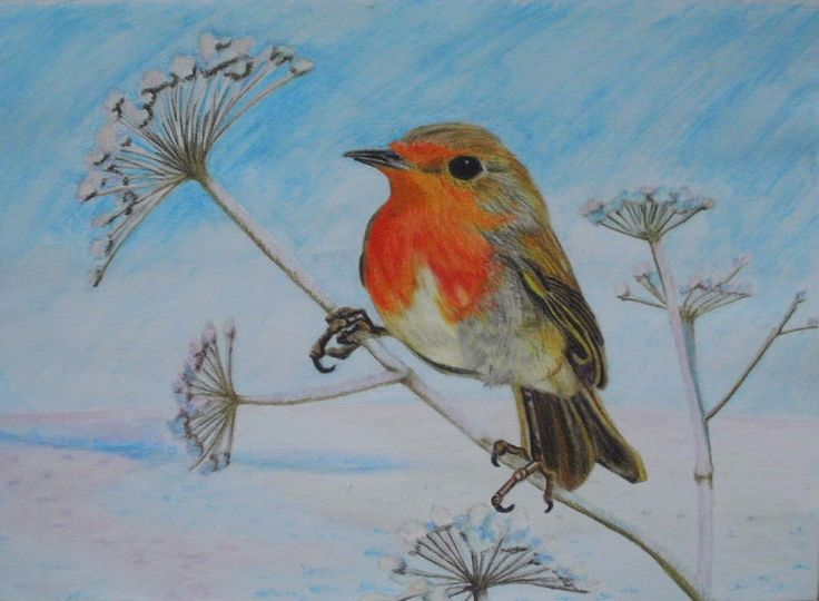 Christmas Greetings Cards. I drew this robin using watercolour pencils.