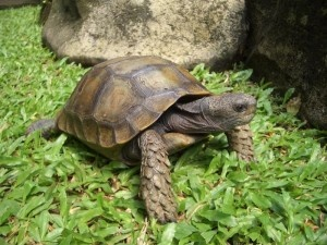 land turtle picture