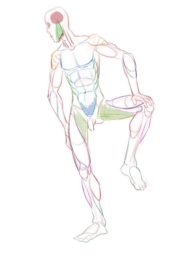 17 besten My Studies of Anatomy Bilder auf Pinterest | Anatomie ...