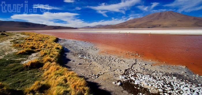 Боливия, Лагуна Колорадо, Красная лагуна, фламинго, Боливия Колорадо, соленые озера, розовый фламинго фото, достопримечательности Боливии, красное озеро, розовый фламинго