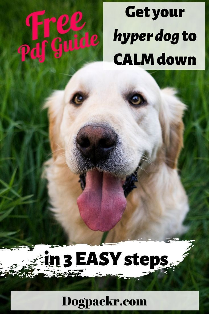 Get Your Hyper Dog To Calm Down In 3 Easy Steps Hyper Dog Calm Hyper Dog Relaxed Dog