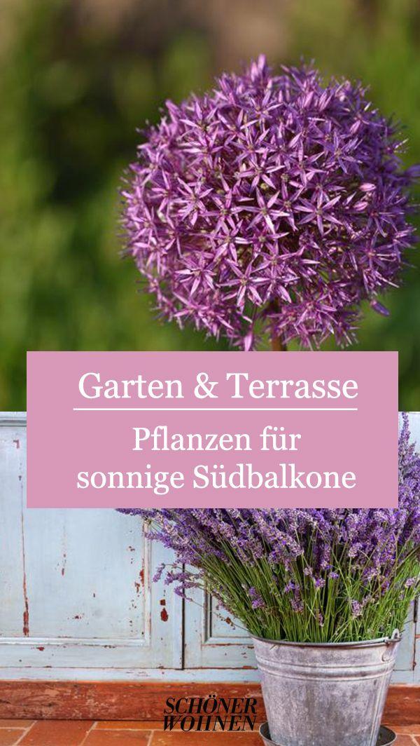 Zierlauch Allium Spec Bild 2 In 2020 Pflanzen Terrasse Pflanzen Garten