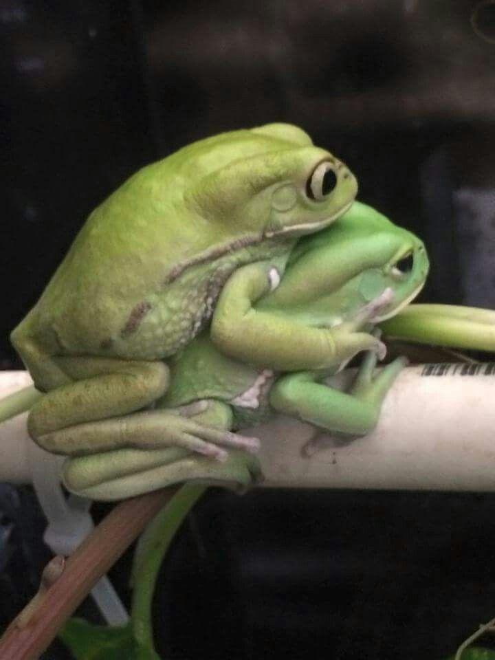 Cute Frog Porn - Frog porn