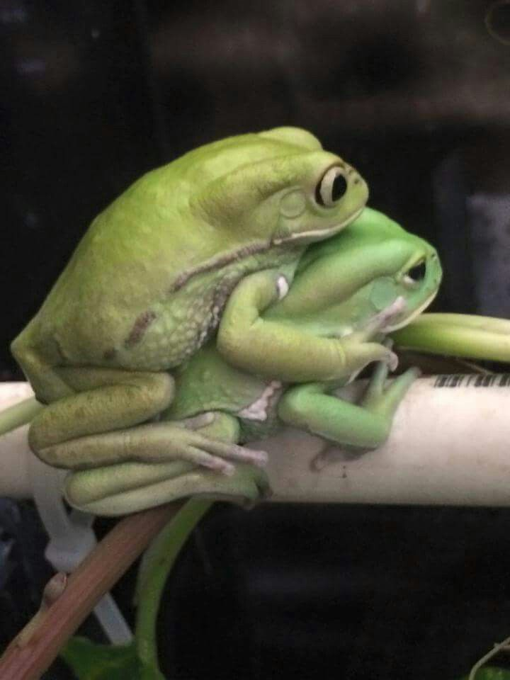 Frogs Porn 19