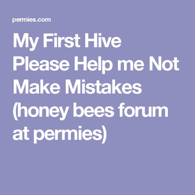 My First Hive Please Help Me Not Make Mistakes  Honey Bees
